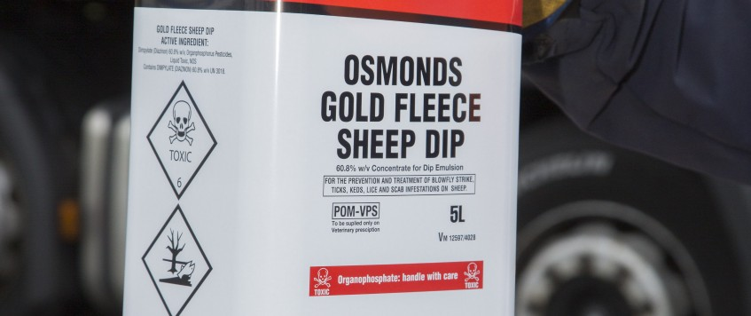 1003Delsol Sheep Dip14